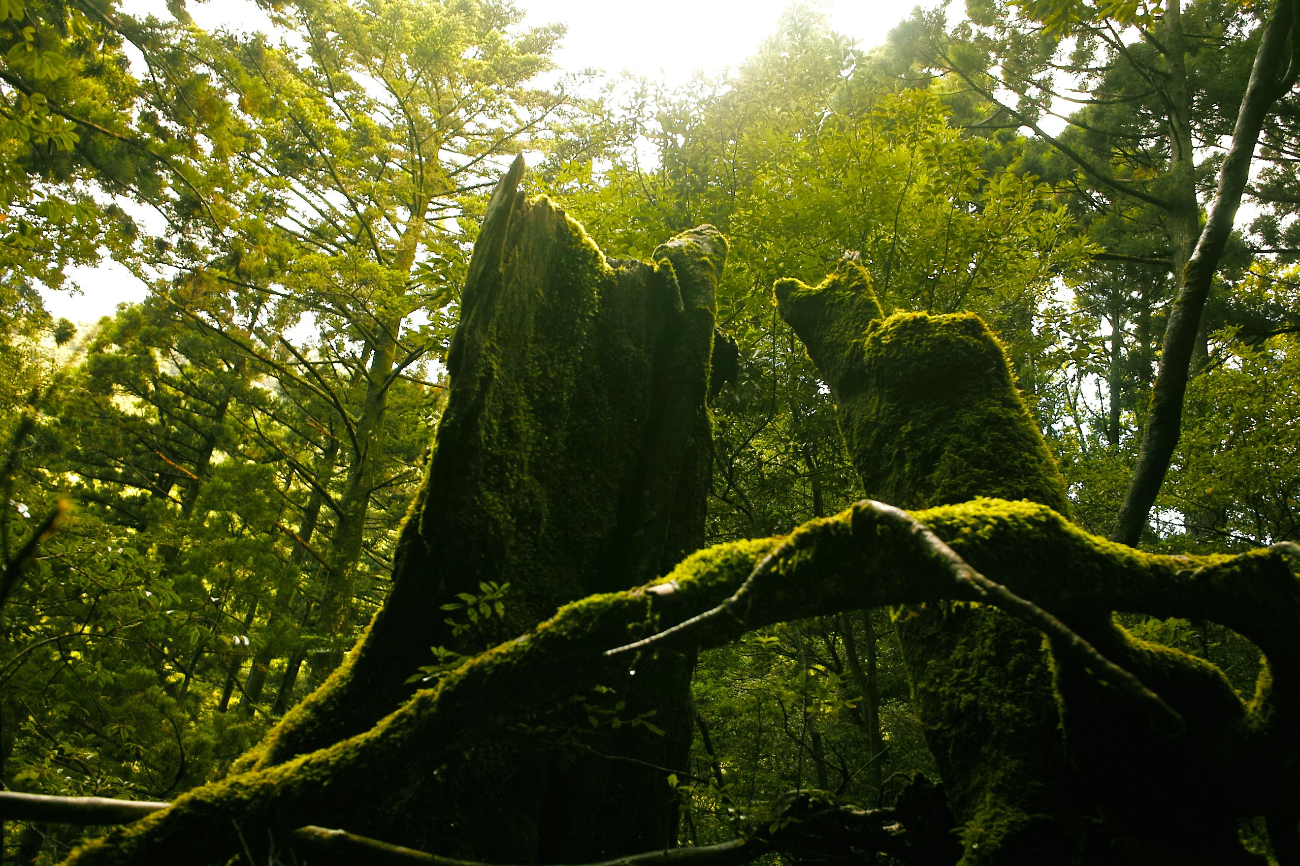 3度目の屋久島登山 白谷雲水峡と縄文杉