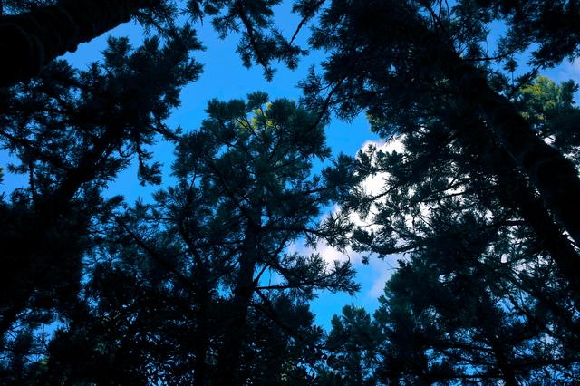 森からの青空